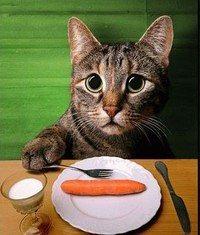 on vit très bien sans portable ! je préfère un ronronnement de chat !!