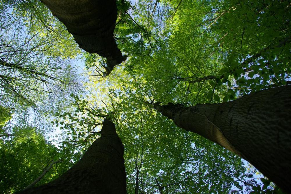 arbres-large