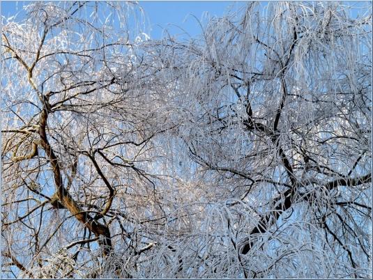 paysage-hiver-strasbourg-janvier-2009-01