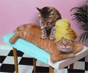 massage-chat